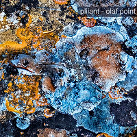 pliiant - olaf point - front small.jpg