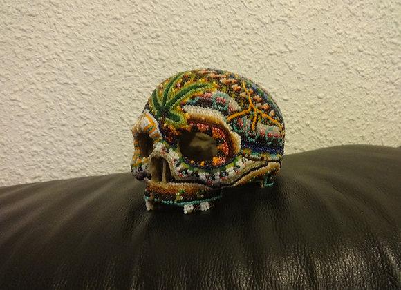 Crâne primate mario-cana