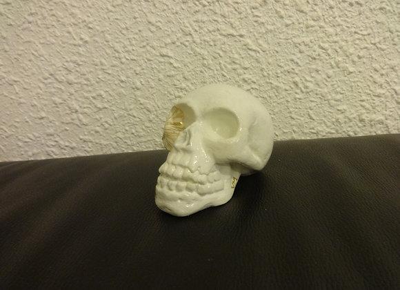 Crâne céramique Blanc et or citron