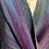 """Thumbnail: Blue """"Hummingbird"""" Twist Shawl"""