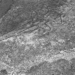 VisTraces_(AU_Ku-ring-gai_Aboriginal-engr-goana_2012_Feb_27_GL_0.6k)