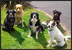 dog trainer training dogs monaghan