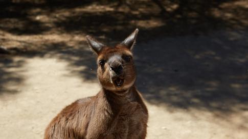 Australia_Donate_26
