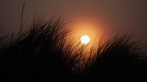 sunrise in the dunes