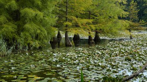 Schlosspark Dennenlohe_004