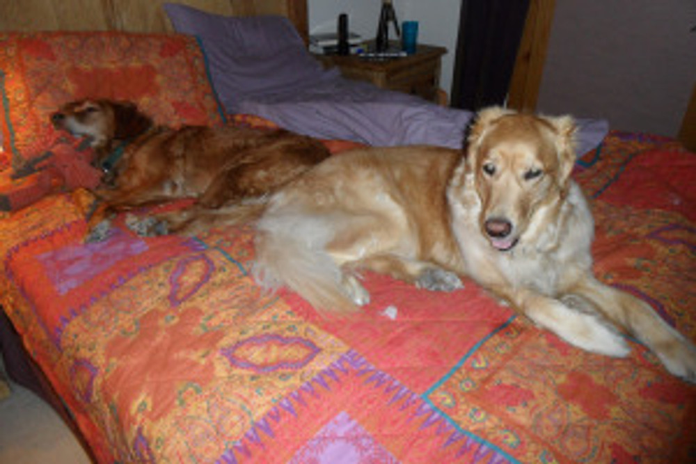 Kira fast asleep next to Yogi on the bed