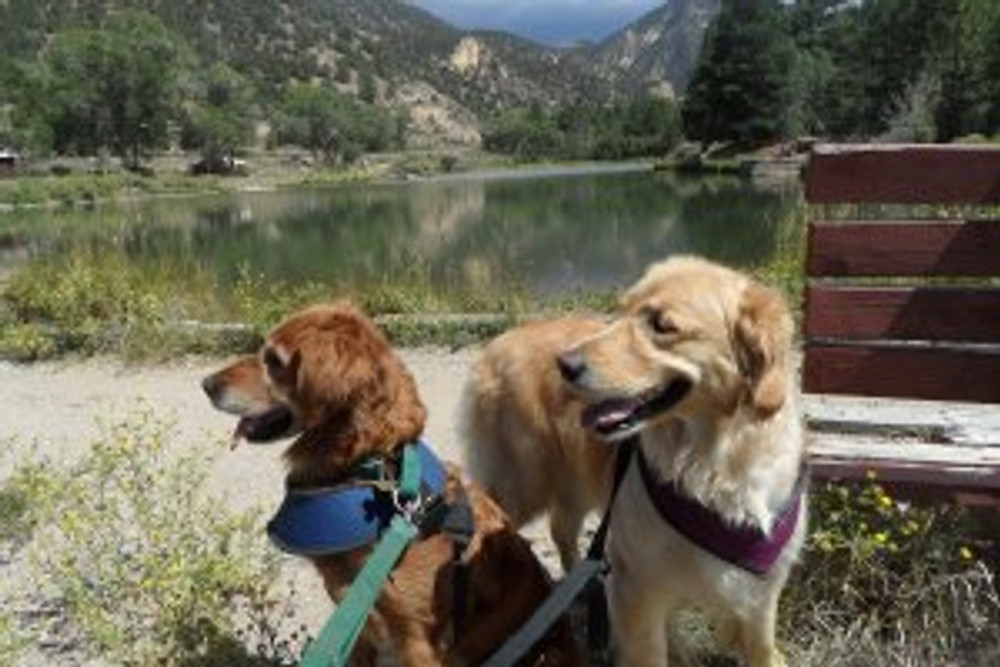 Girls at trout pond in Questa