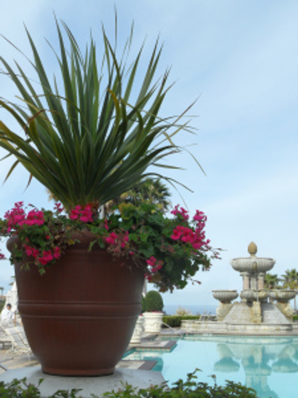 Beautiful plantings around the pool at St Regis