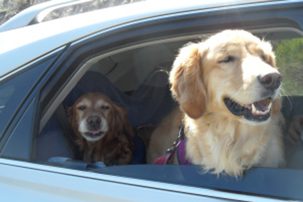 Yogi and Kira on a ride to Taos
