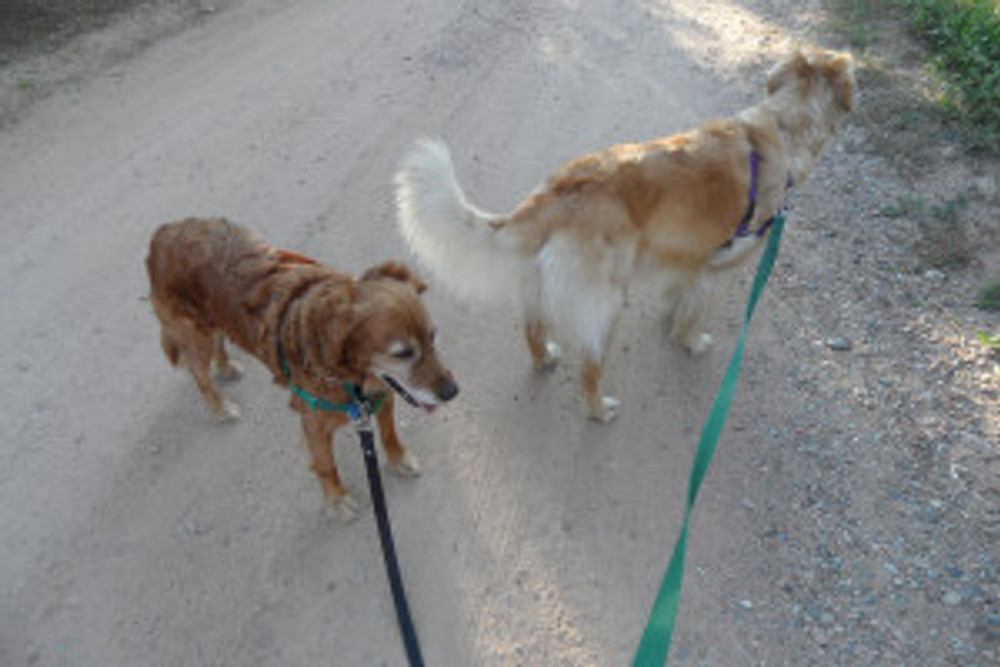 Yogi and Kira on the dusty trail