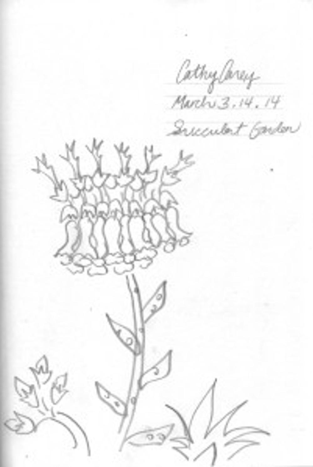 succulent garden p.1