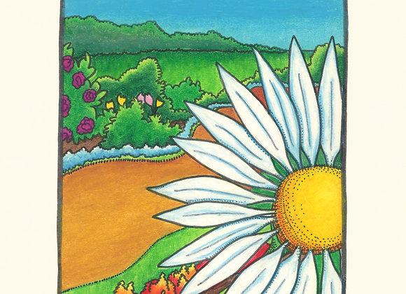 Daisy Path - Giclée Print on Canvas