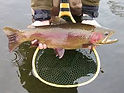 FLY FISHING STEAMBOAT SPRINGS COLORADO PRIVATE CAR TRANSPORTATION