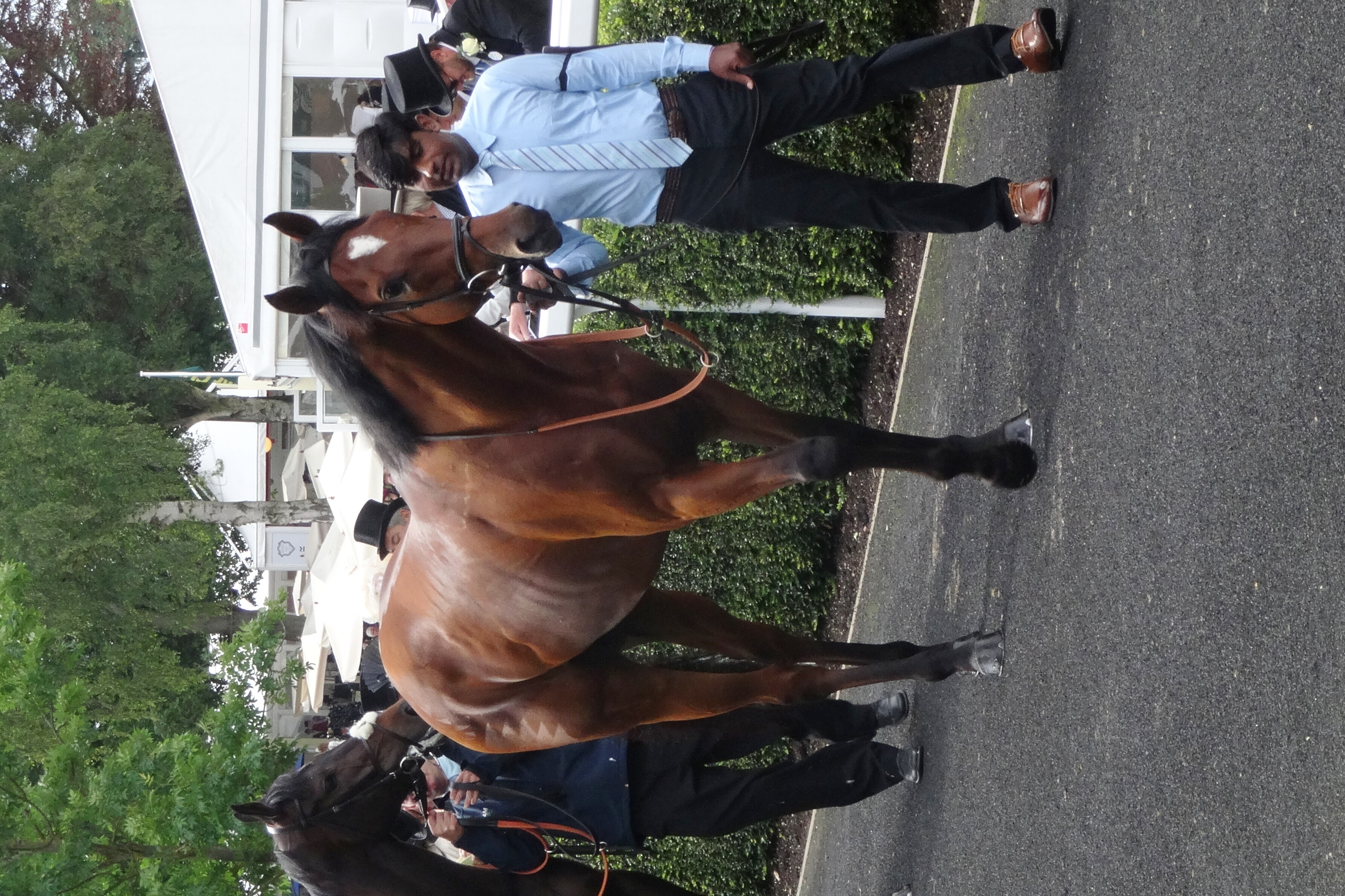 Mikmak and Himmat at Royal Ascot