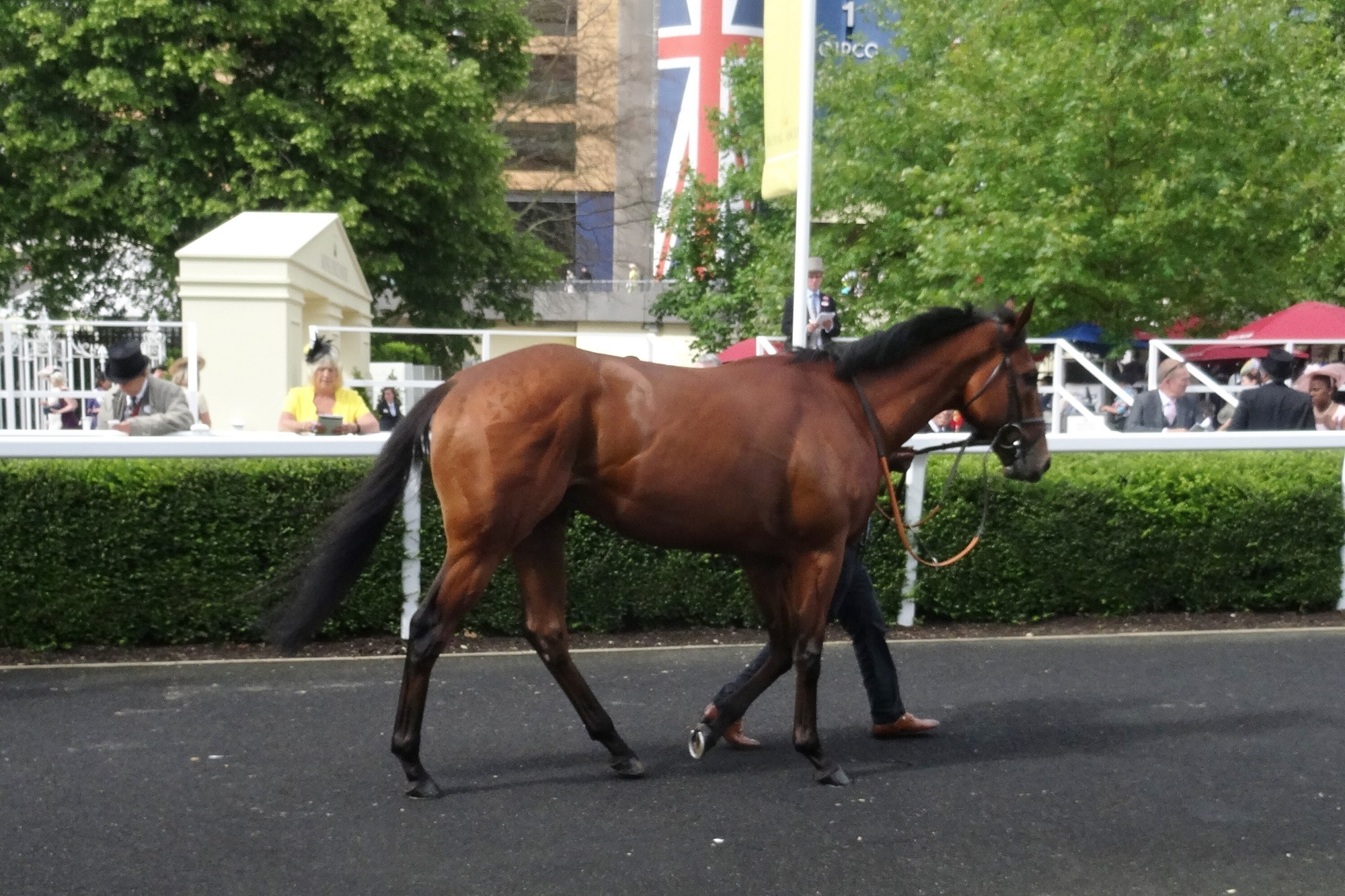 Mikmak at Royal Ascot