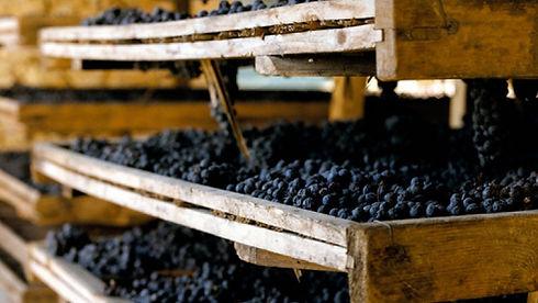 Amarone della Valpolicella, arele, essic
