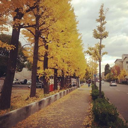 Side Street of Kyoto University