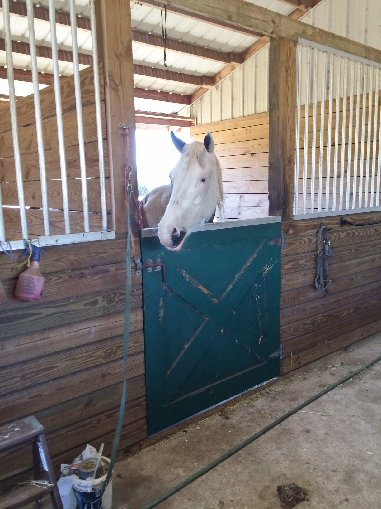 julie's horse.JPG