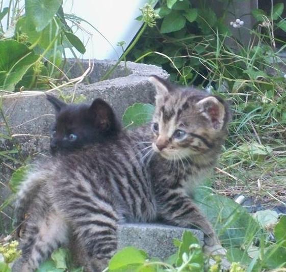 pam harper's kittens.jpg