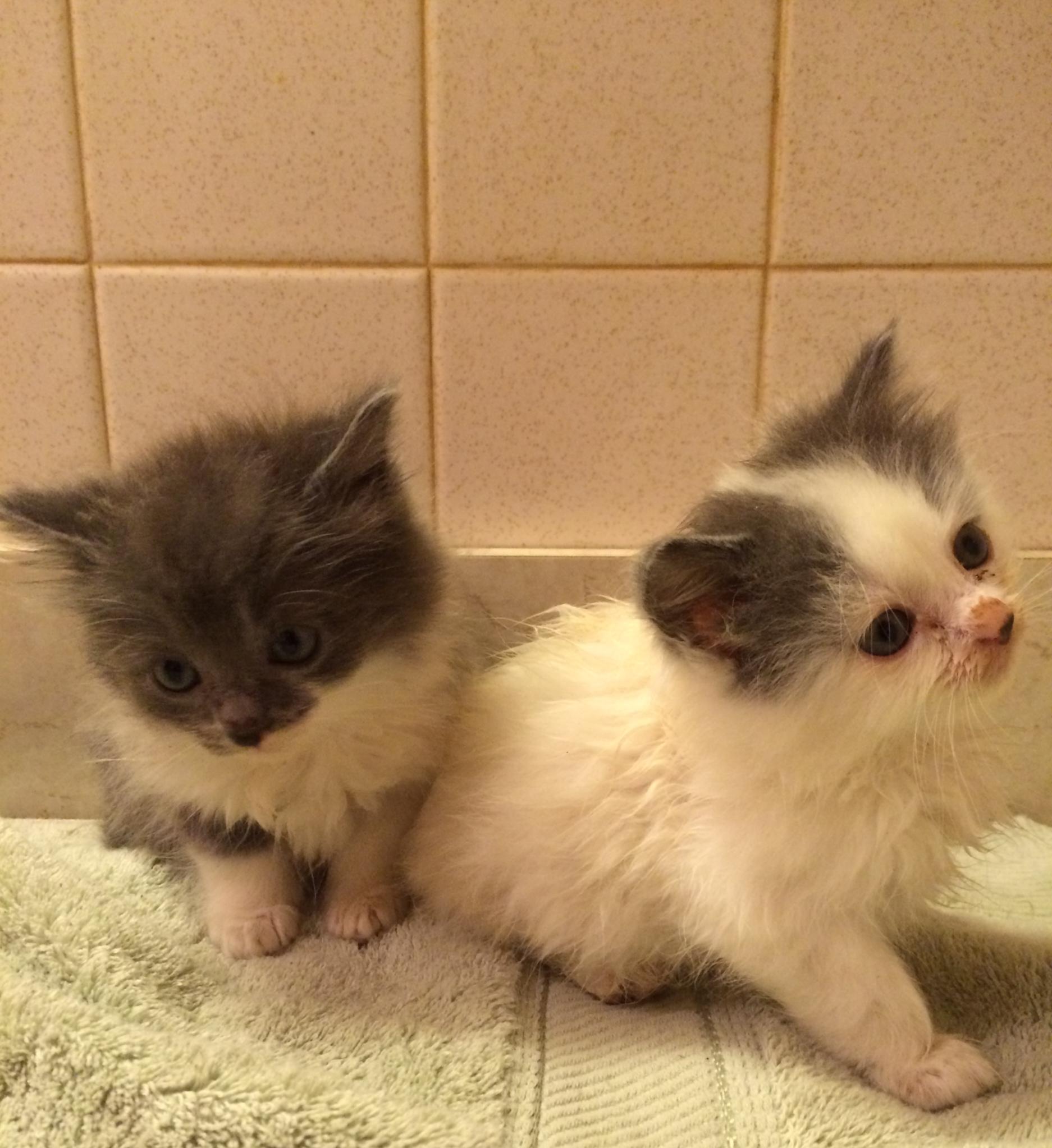 diane kittens 2.JPG