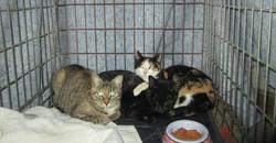 kitties at Janes.JPG