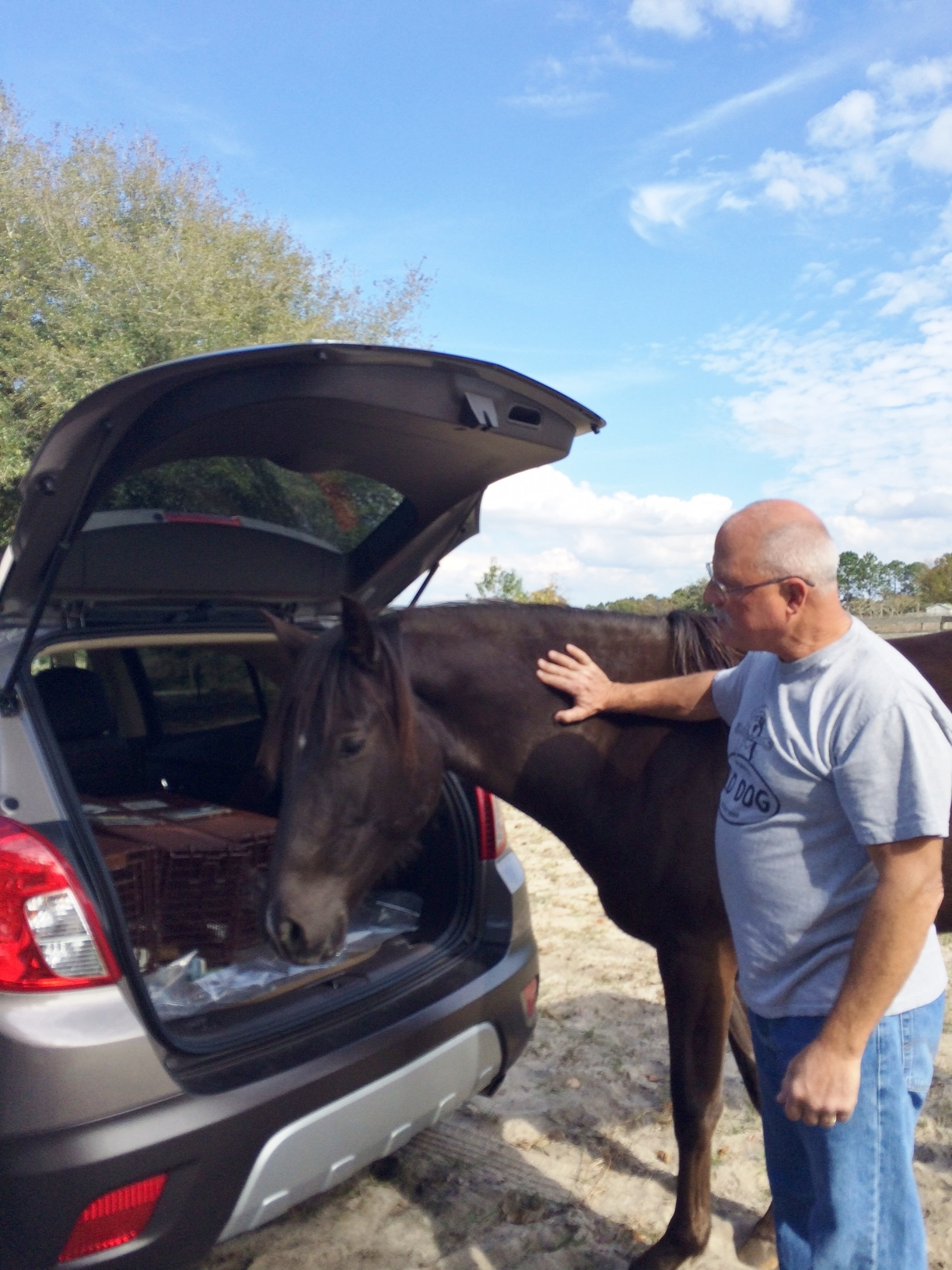 horse checking out trunk.JPG