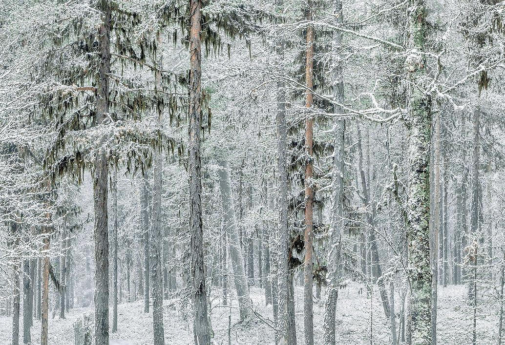 R.Kovalainen.jpg