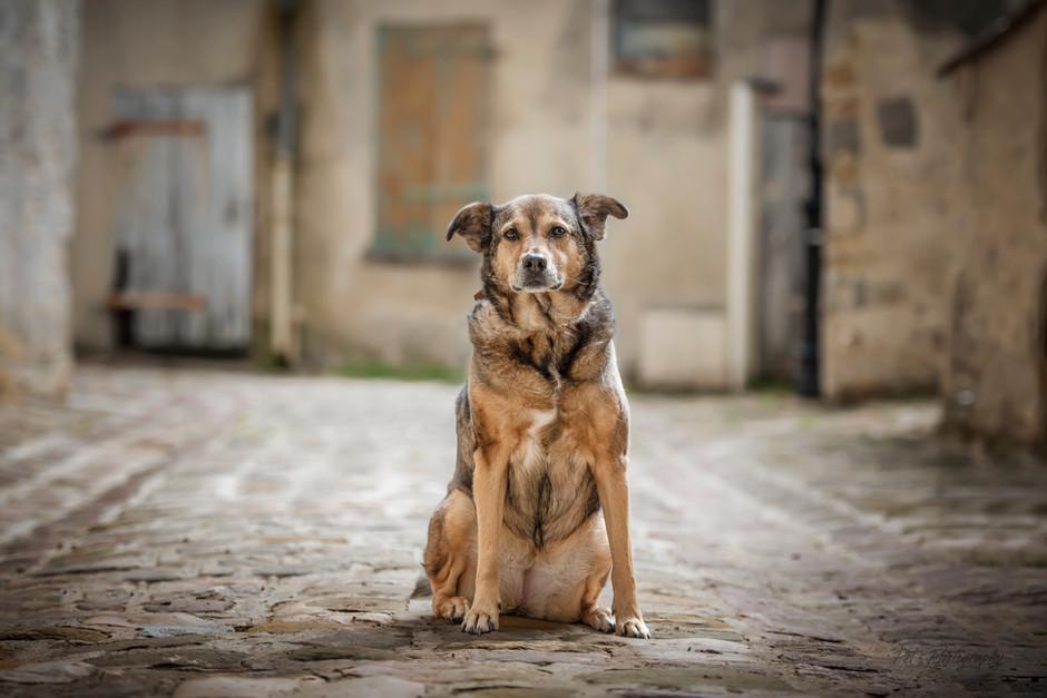 séance photo canine en milieu urbain