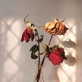 rose.jfif