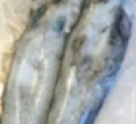 Kangaroo Island Southen Calamari