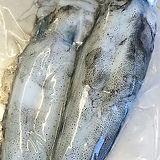 Kangaroo Island Southen Calamari or squid