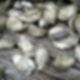 Wholeshell Kangaroo Island Pacific Oysters