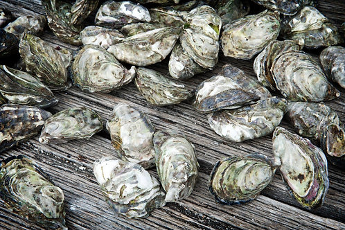 Wholeshell (unopened) Kangaroo Island Premium Oysters