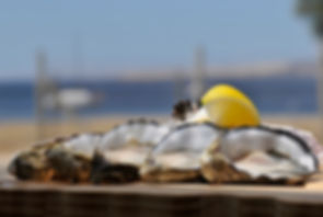 Fresh Kangaroo Island Oysters from The Oyster Farm Shop