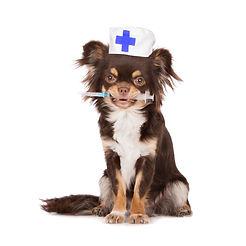 West-Park-Animal-Hospital-Vaccinations.j