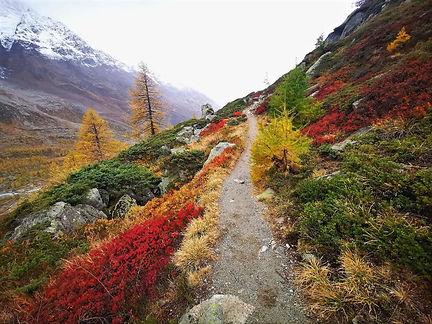Autumn Immersion.jpg