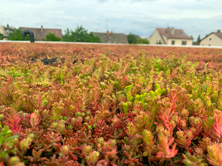 Jak na financování zelené střechy?