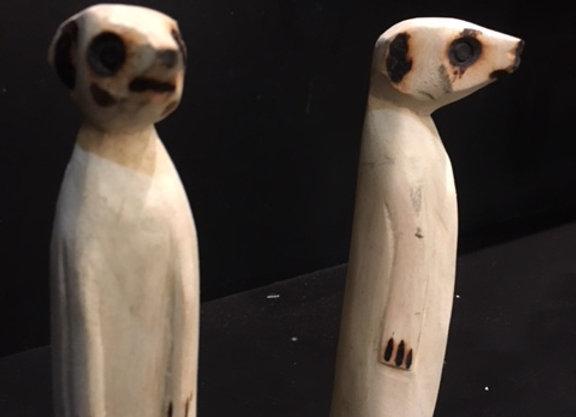 Medium Meerkats