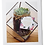 Thumbnail: Succulents in Round Jar