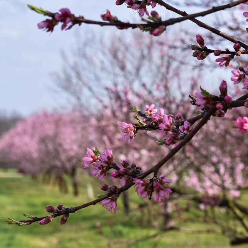 HVO is Blooming!