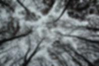 des arbres