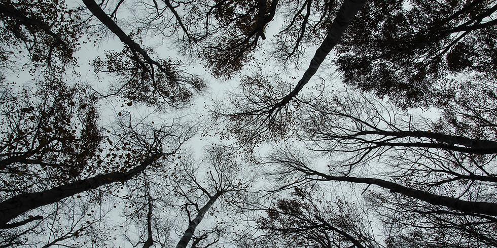 Tree Trackers