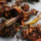 Tumeric Seed2.jpg