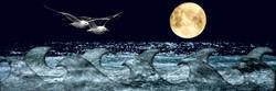 Gaivotas e Lua
