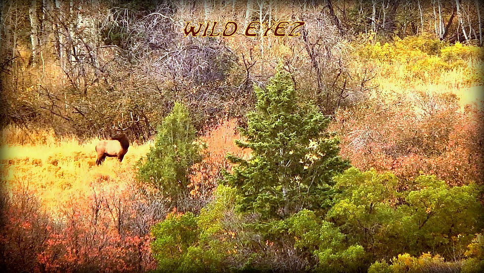 Elk Fall Colors