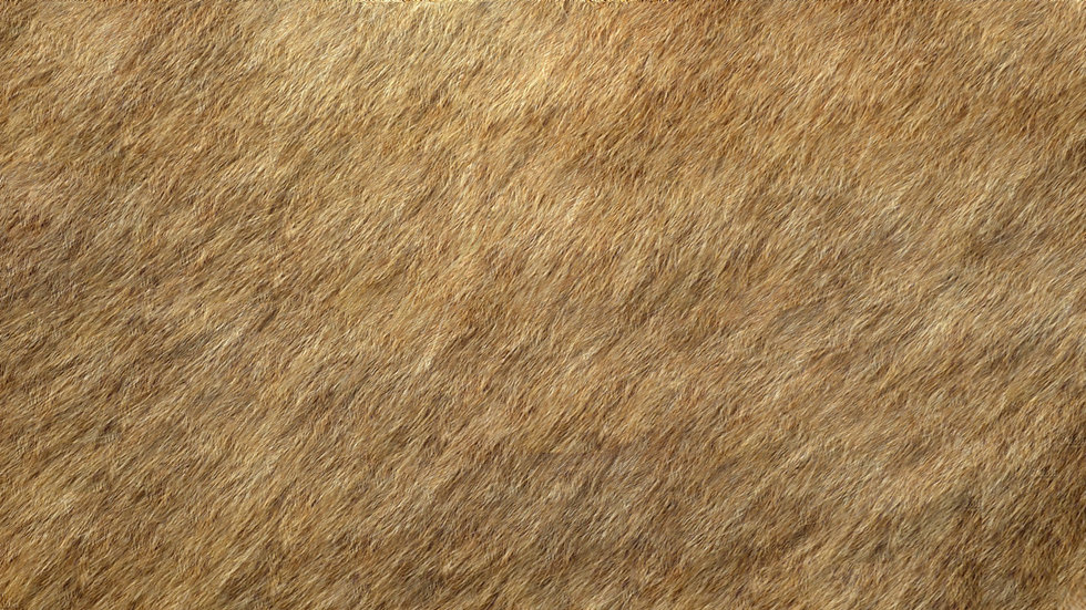 Elk-Hide-BackGround-.jpg