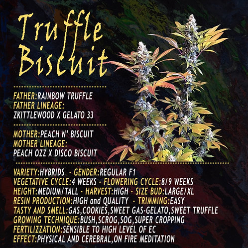 Truffle Biscuit