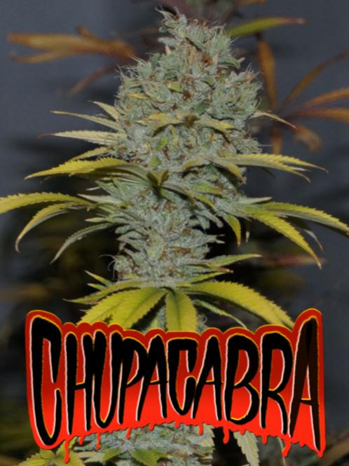 Chupacapra