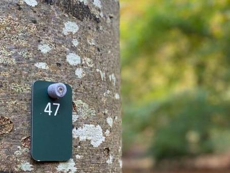 Vi mangler skovbegravelsespladser i Nordjylland