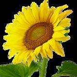 Flower TRANS.png